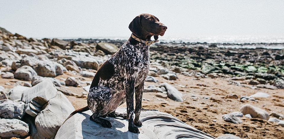 Coastal Collection The Best Dog-Friendly Cafés
