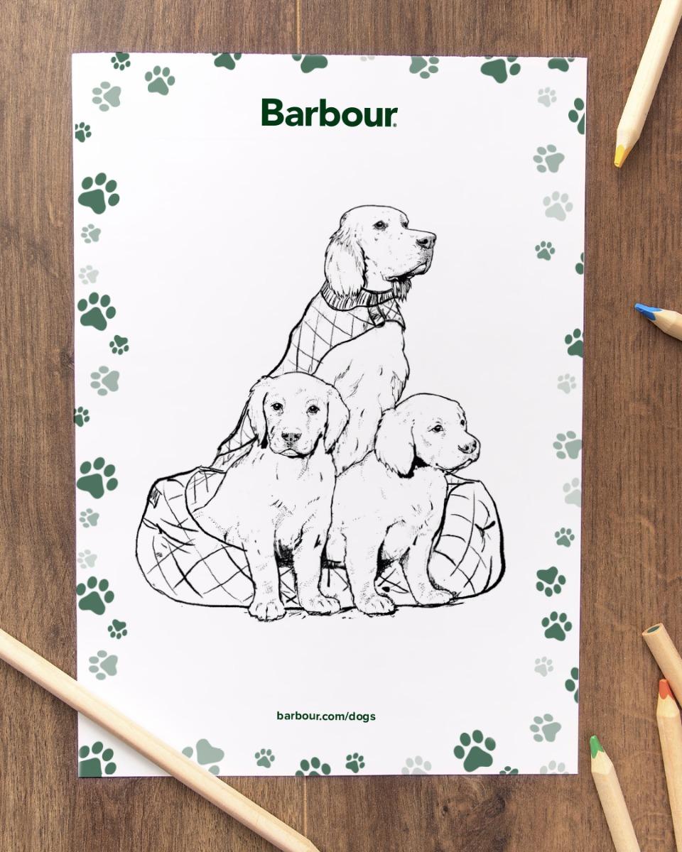 Background image for Labrador