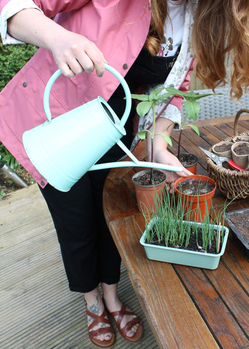 How to Sow and Grow at home with Hayley Moisley