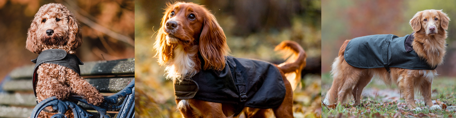 Barbour Christmas: Meet Our Christmas Barbour Dogs