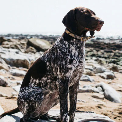 Background image for Coastal: Dog-Friendly Cafés