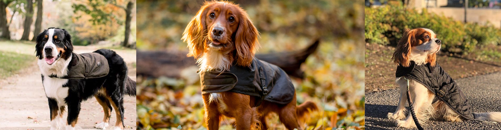 Barbour Dogs Dog of the Month Competition